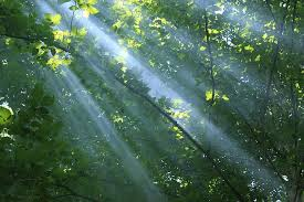 rayon, forêt, lumière, la nature, fantaisie, Soleil, des arbres, vert, été,  la magie, rayon de soleil | Pikist